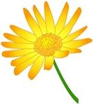 daisy-kiiro.jpg