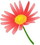 daisy-pink.jpg