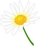 daisy-shiro.jpg